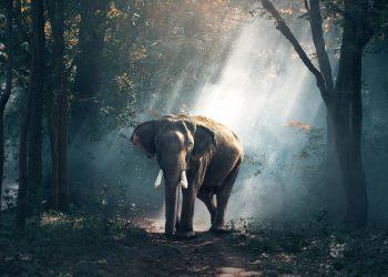 Elephant 1822636 1920