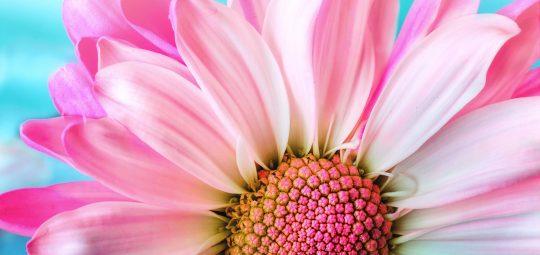 Flower 3140492 1920